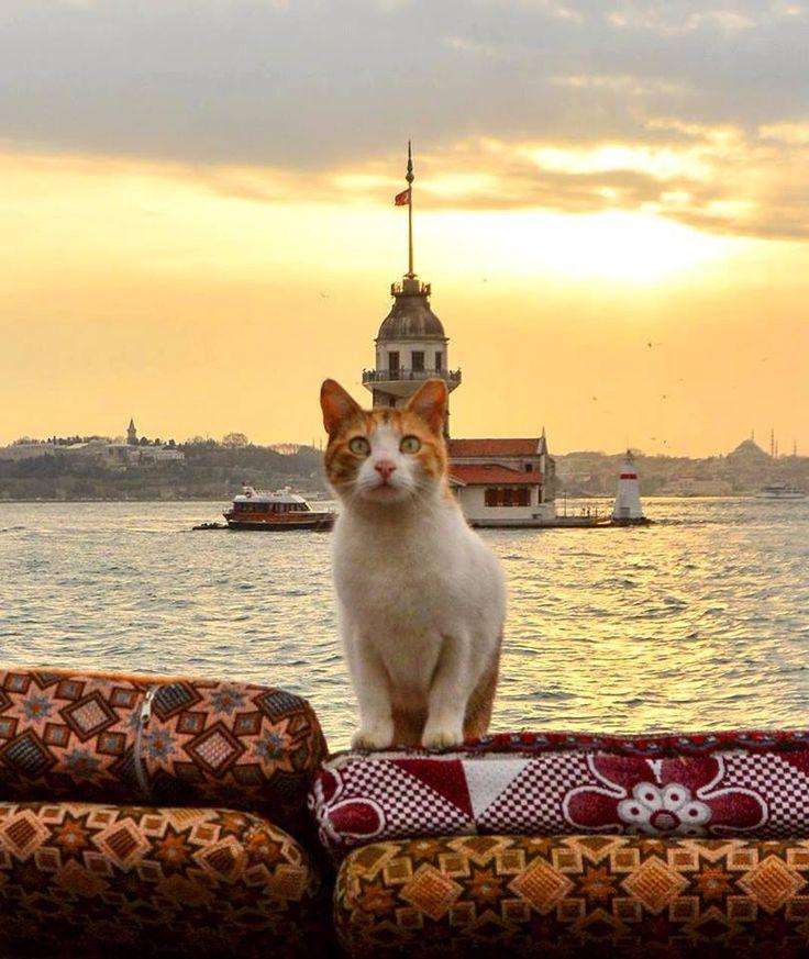 İstanbul  ᘡℓvᘠ❉ღϠ₡ღ✻↞❁✦彡●⊱❊⊰✦❁ ڿڰۣ❁ ℓα-ℓα-ℓα вσηηє νιє ♡༺✿༻♡·✳︎· ❀‿ ❀ ·✳︎· MON OCT 24, 2016 ✨ gυяυ ✤ॐ ✧⚜✧ ❦♥⭐♢∘❃♦♡❊ нανє α ηι¢є ∂αу ❊ღ༺✿༻✨♥♫ ~*~ ♪ ♥✫❁✦⊱❊⊰●彡✦❁↠ ஜℓvஜ