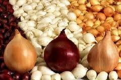 Как подготовить лук-севок к посадке. Казарин А.