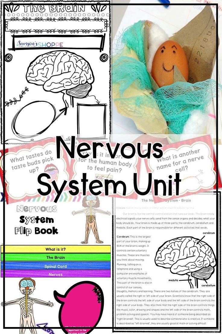 Nervous System Unit Activities Project Activities Human Body