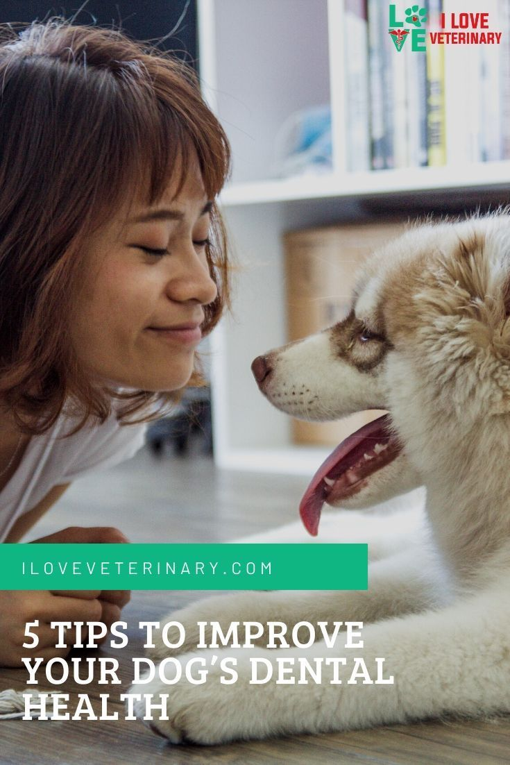 5 Tips To Improve Your Dog S Dental Health I Love Veterinary In
