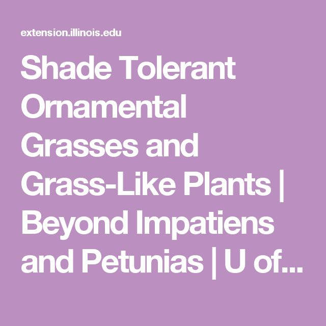 Shade Tolerant Ornamental Grasses and Grass-Like Plants | Beyond Impatiens and Petunias | U of I Extension