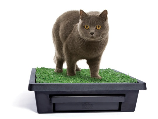 1000 images about grass litterbox for dogs on pinterest. Black Bedroom Furniture Sets. Home Design Ideas