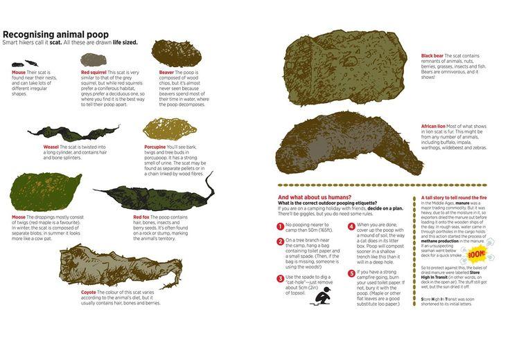 Ht Animal 1240 826 V Holmes Nigel Pinterest