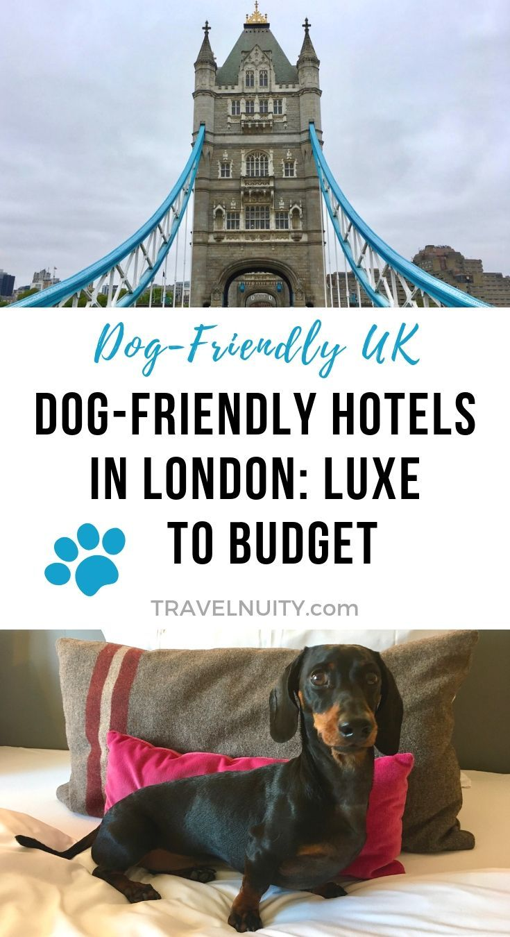 10 Best Dog Friendly Hotels In London From Luxury To Budget Dog Friendly Hotels Dog Friends Travel Around The World