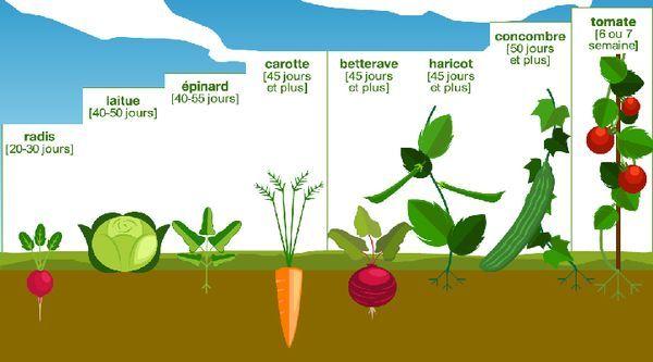 Obtenir rapidement un potager naturel - conseils pour le potager