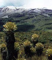 Paisaje actual del páramo, donde las restricciones físicas fueron atenuadas hace 10.000 años por un clima moderado, lo cual permitió el desarrollo de una gran biodiversidad y la interacción entre plantas y otros organismos.