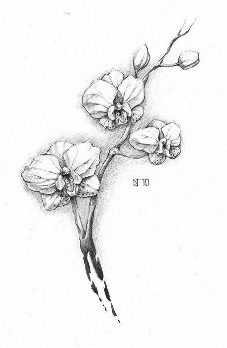 рисунок орхидеи тату