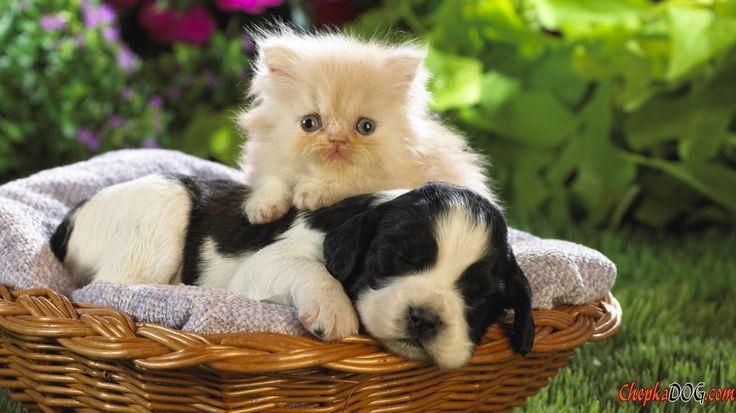 Fotos de gatinhos e cachorros