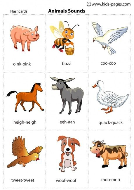 Animals Sounds flashcard