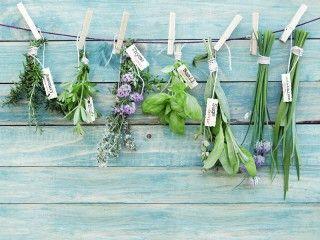 Nietypowe zioła – warto mieć je w kuchni