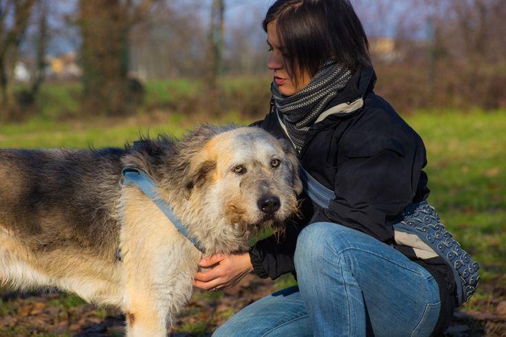 L'Associazione Squadra 4 Zampe cerca volontari attivi nella zona di MILANO. L'attività del volontario di Squadra 4 Zampe si svolge principalmente presso il rifugio dove i nostri cani sono ospiti .Il volontario in rifugio fa passeggiare i cani, li spazzola, li coccola, interagisce con loro e controlla il loro benessere psicofisico, tutto ciò con l'obbiettivo di preparare il cane all'adozione. Diventa anche tu parte attiva della Squadra! Info: Cristina Nera Responsabile dei volontari…
