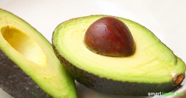 Die Avocado gilt als gesundes Superfood doch sind viele der Vitalstoffe im Kern gespeichert. Finde heraus, was sie für deine Gesundheit leisten können.