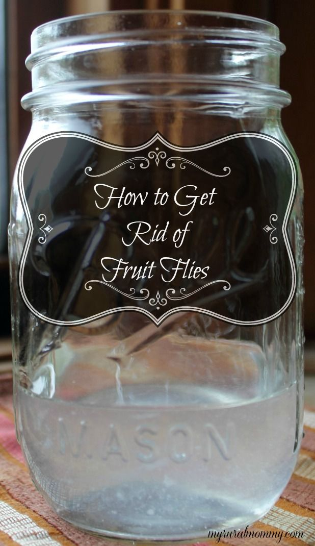 How to get rid of fruit flies using 3 common household items! #nontoxic #frugal. Fill the jar about 1/4 full with the vinegar and then add 2-3 drops of the dish soap. Leave this sitting on the kitchen counter overnight and when you wake up in the morning you will see it chock full of those pesky little buggers.