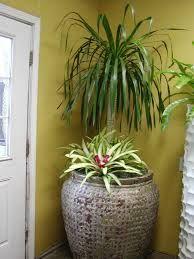 40 best images about house plants for house warming so cool on pinterest shops. Black Bedroom Furniture Sets. Home Design Ideas