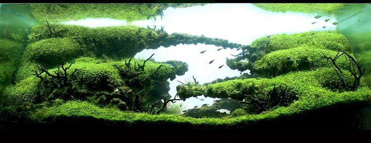 www.ibrio.it your aquarium born here ! il tuo acquario nasce qui ! https://www.facebook.com/ibrio.it #acquario #acquari #acquariologia #acquariofilia #aquarium #aquariums #piante #natura #pesci #zen #design #arredamento #layout #layouts #layoutdesign #roccia #roccie #ibrio #moss #freshwater #plantedtank #aquadesignamano #tropicalfish #fishofinstagram #aquaticplants #natureaquarium #nanotank #reefkeeper #nanoreef #saltwateraquarium