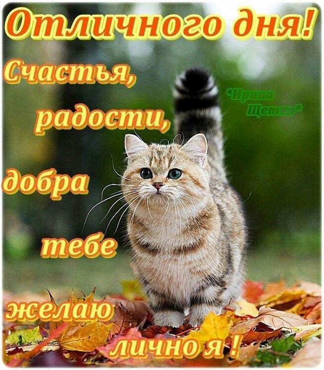 прикольные котята с пожеланиями хорошего дня только