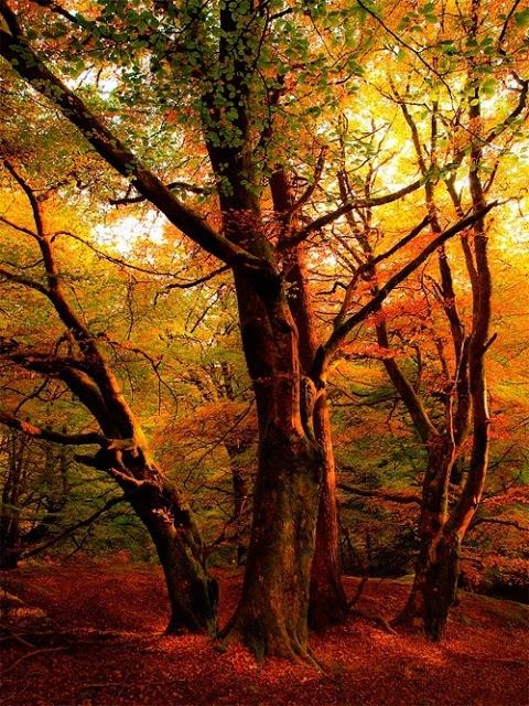 Autumn Sunset, Callander, Scotland | (10 Beautiful Photos)