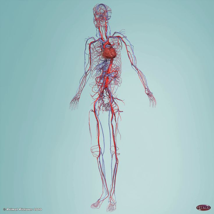 Anatomy and Physiology Online contains 19 modules with clear 3D images and interactive models, narrated animations and illustrations, dissection slides you can label, clinical case studies, the impact of aging on each body system, pronunciation guide, quizzes and much more.