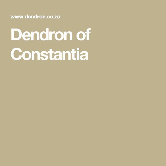 Dendron of Constantia