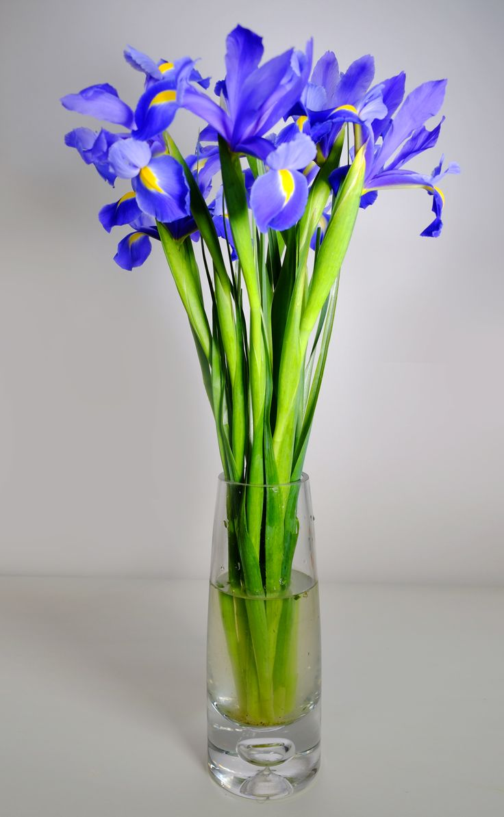 Thalassa is a virbrant and feminine arrangement features with indigo irises, this sweet and lovely bouquet is an ideal gift to say thank you or surprise someone. Vase Not Included. - See more at: http://www.timesflora.com/Thalassa