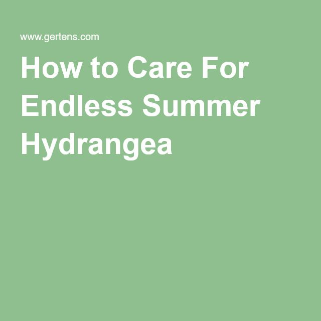 How to Care For Endless Summer Hydrangea