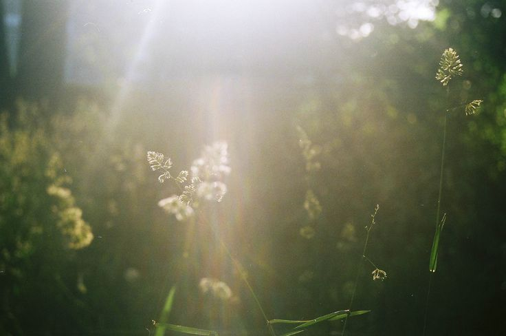 https://flic.kr/p/f2S4ND | Tall Grass and Sunlight | Nikon N65 with 28-80 and Lomography CN800. I love tall grass and the innocence it has.