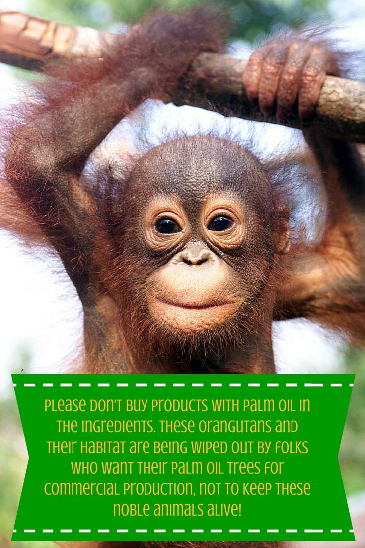 17 Best Images About Orangutans And No Palm Oil On Pinterest