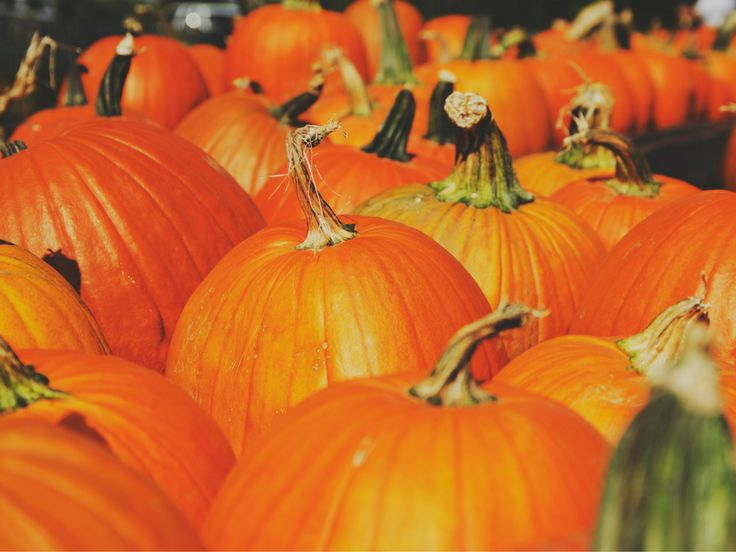 Looking for the best pumpkin patches in Georgia? This is a list of the best local pumpkin patches, corn mazes, hayrides, and other fall activities to visit all around Georgia, sorted by county. Bartow Farm: Adairsville Pumpkin Patch Location: 230