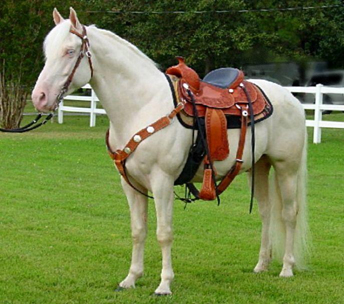 Best Gaited Horses Images On   Beautiful Horses