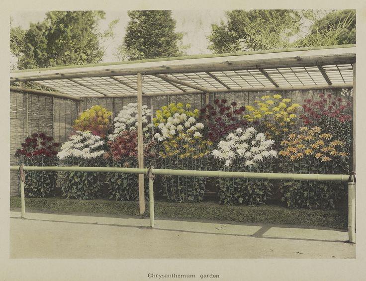 Chrysanthemum Garden; Kazumasa Ogawa (Japanese, 1860 - 1929); Yokohama, Japan; 1896; Hand-colored collotype; 20.5 x 28.4 cm (8 1/16 x 11 3/16 in.); 84.XB.759.6.6: