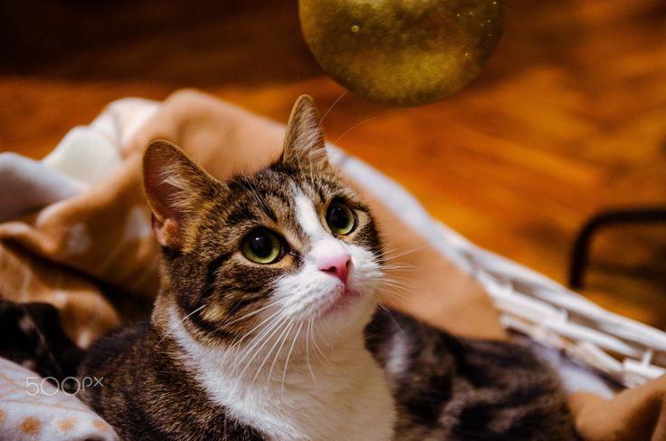 Waiting for Christmas - Maya under a  Christmas tree!