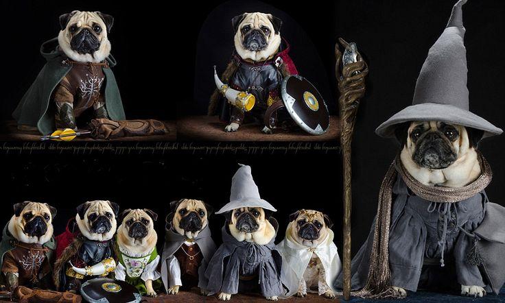 Heel Gandalf Dog Owner Dresses His Pet Pugs In Hilarious