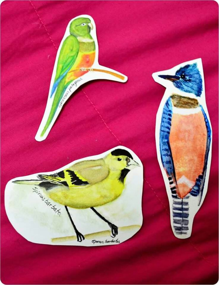 "Aves de Chile ""adhesivos"" tricahue jilgero martin pescador #art #watercolor"