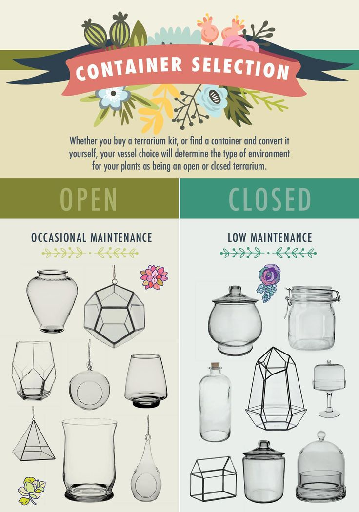 Choose the Right Container for Open Vs Closed Terrariums
