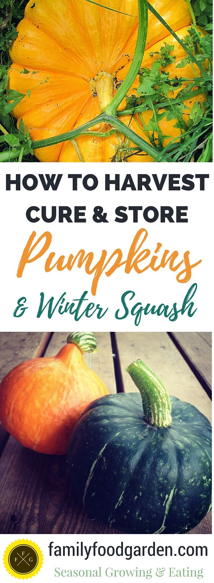 How to harvest, cure & store winter squash and pumpkins.