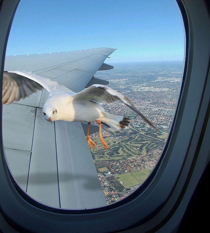 Смешные картинки про самолетов, хрюшками новый