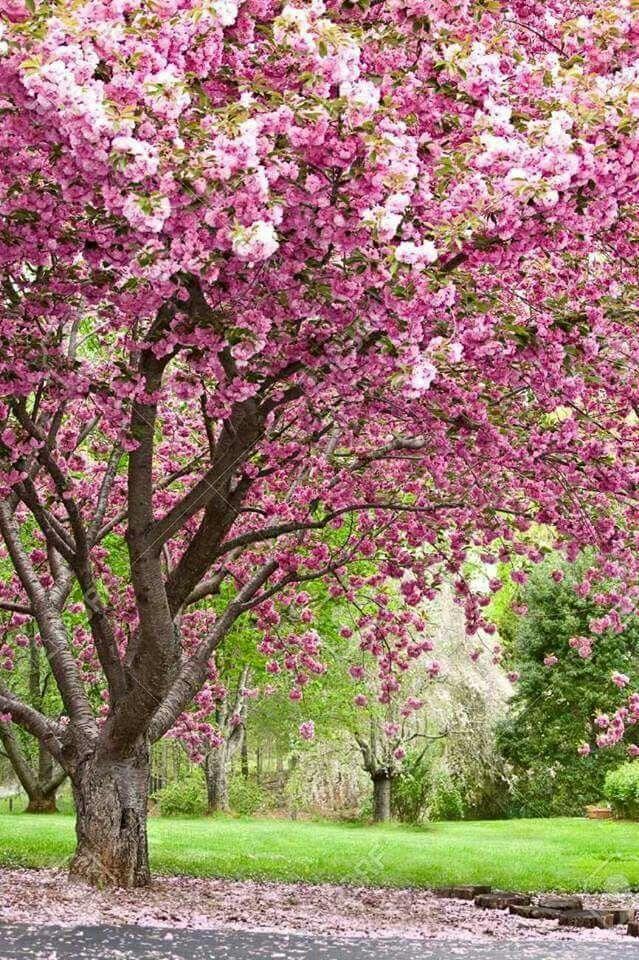 Il ramo fiorito
