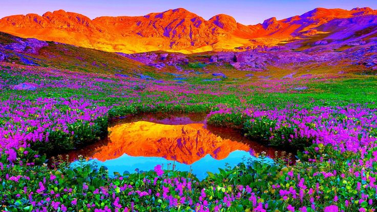 Brilliant Colors Of Nature Hd Desktop Background wallpapers HD ...