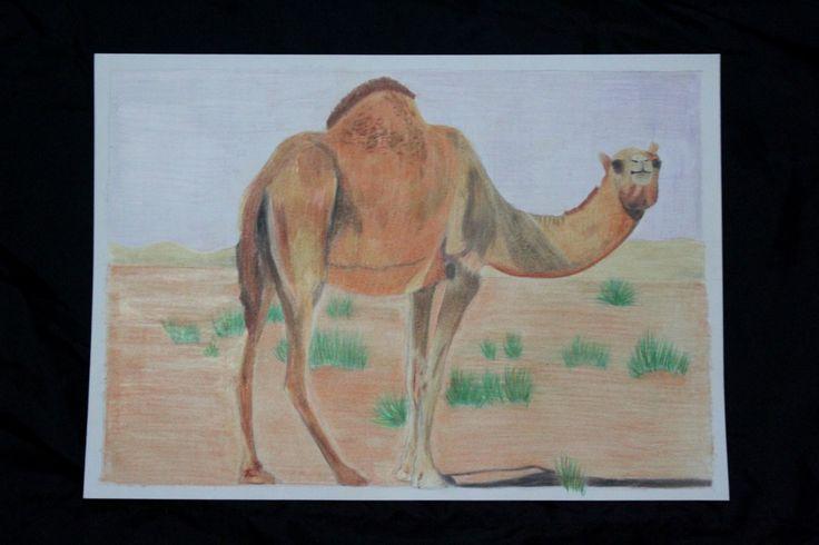 Camel - Pensil warna #Arsitekturinterior #interiorarchitecture #drawing