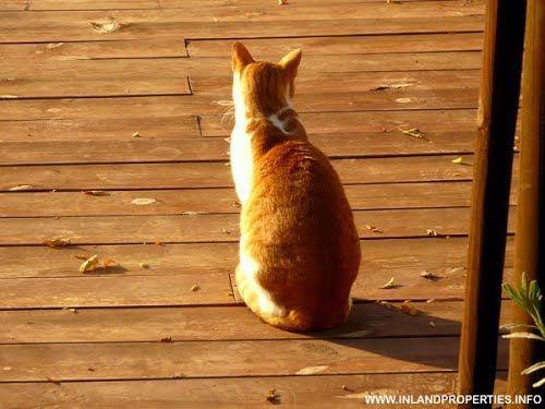 A cat in Alora Malaga