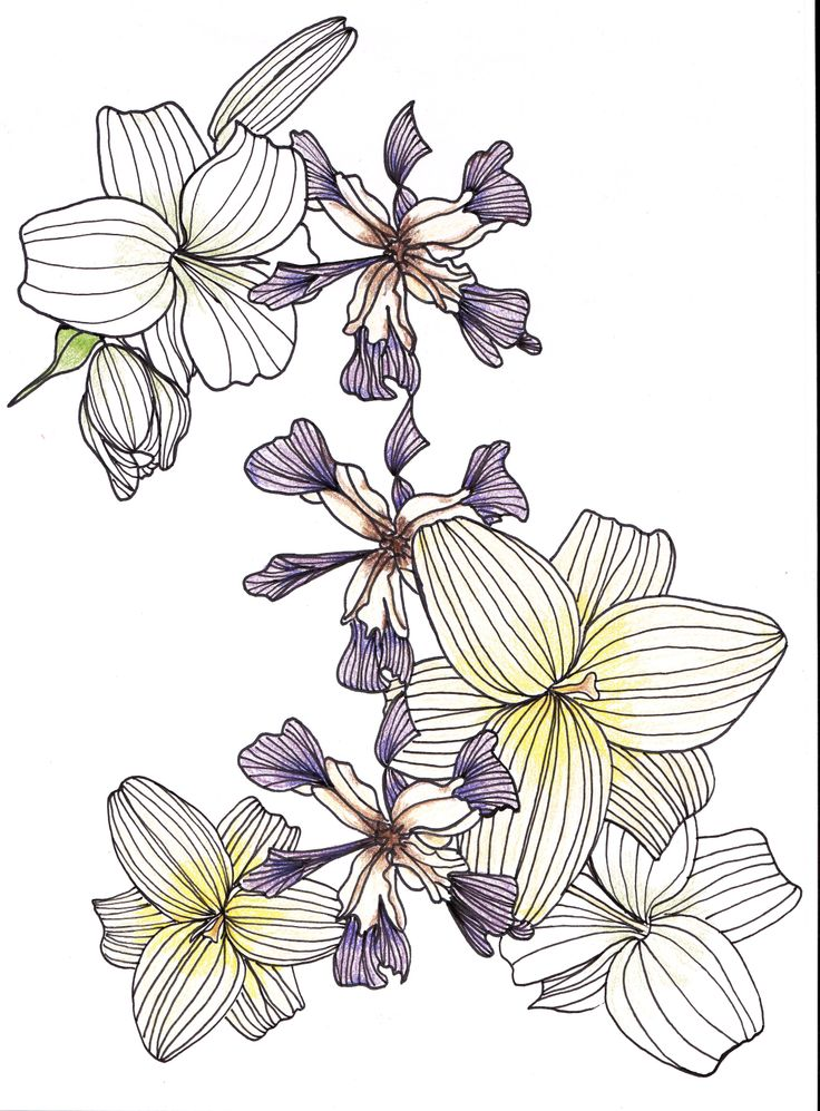 Flower Circle Line Drawing : Line drawing flowers lilies iris drawings