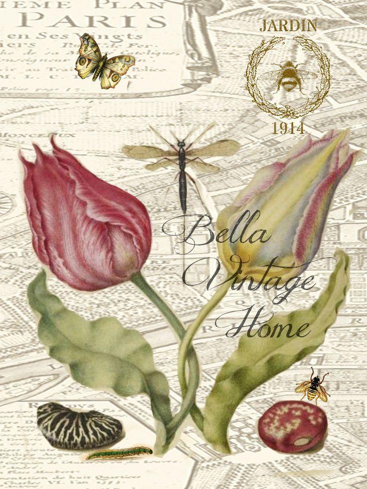 487 Best Images About Ilustraciones De Flores On Pinterest
