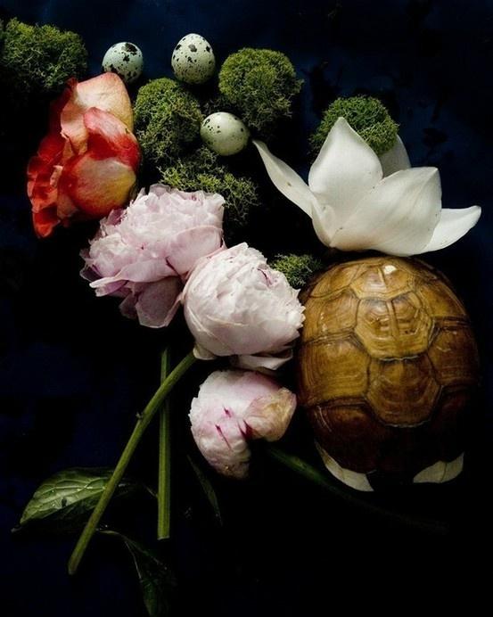 turtle stil life