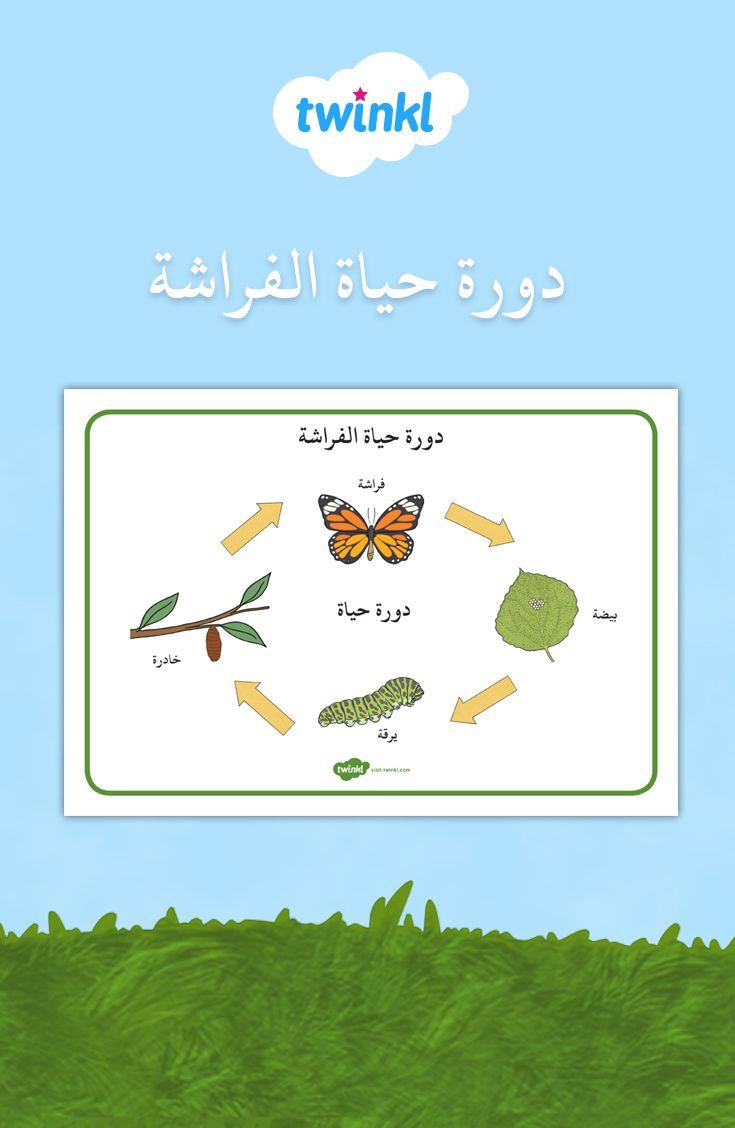 دورة حياة الفراشة Childrens Learning Photo Frame Wallpaper Framed Wallpaper