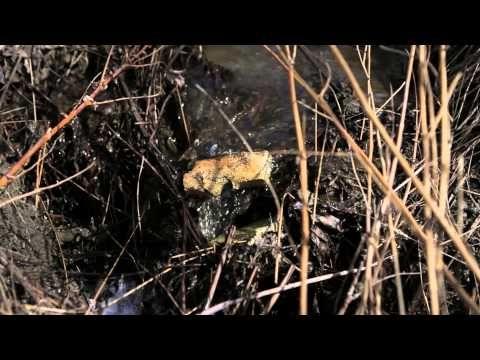 Muovinen meremme - YouTube