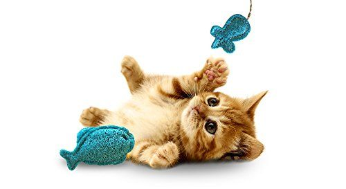 I just had to pin this, I thought this was great All Natural Pet Toys For Cats, Hamsters, Rabbits, Kittens, Ferrets, Small Dogs - Best Fun Interactive Chew Accessory - Funny Mouse and Fish Made of Loofah Material - Perfect in Cages/ Habitats you can read more about it here...