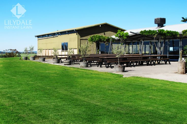 Zonzo Winery | Wedding venue | Lilydale Instant Lawn Care | Love your lawn | Great grass | Lily & Dale | Follow us | Garden Tips & Advice | Contact us | Lawn Solutions Australia Lawn Supplier | Instant Turf |Sir Walter Buffalo DNA Certified | Lawn Solutions Australia | Online Store | Local Pick up & Delivery | Lawn Care | Turf Farm | Melbourne | Victoria | Garden | Grass