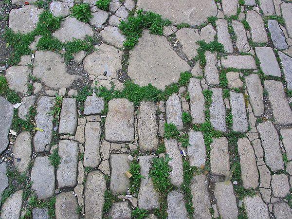 Cobblestone grass
