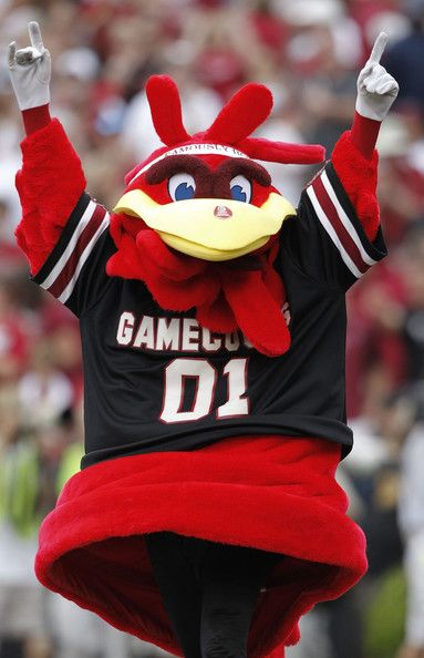 #gamecocks Cocky...  the cutest mascot in the country!!!