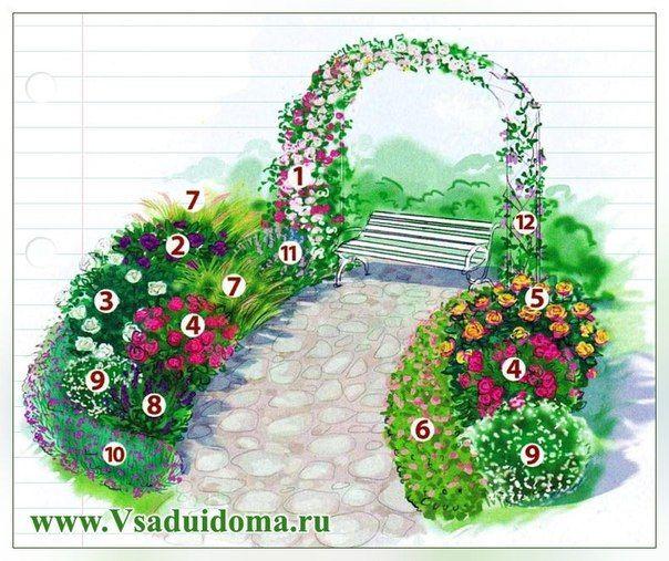 1. Густомахровая роза кораллово-розового цвета «Розариум Ютерзен» ('Rosarium Uetersen'). 2. Сиреневая роза «Блю Ривер» (Blue River') или близкая к синему «Рапсодиин блу» ('Rhapsody in Blue'), 1 шт. 3. Роза «Мемори» ('Memorie') белого цвета или жемчужно-белая с розовым оттенком «Маргарет Меррил» (Margaret Merril), 2 шт. 4. Розовая с желто-оранжевым основанием роза-флорибунда «Макси Вита» ('Maxi Vila'), 2 шт. 5. смотреть на ttp://vk.com/wall-73660843?offset=60&own=1